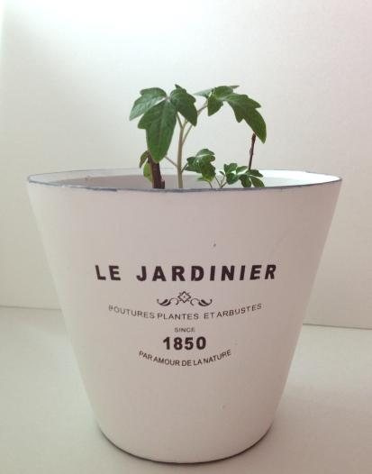 Garden urban barn plant pots white cabana for Le jardinier