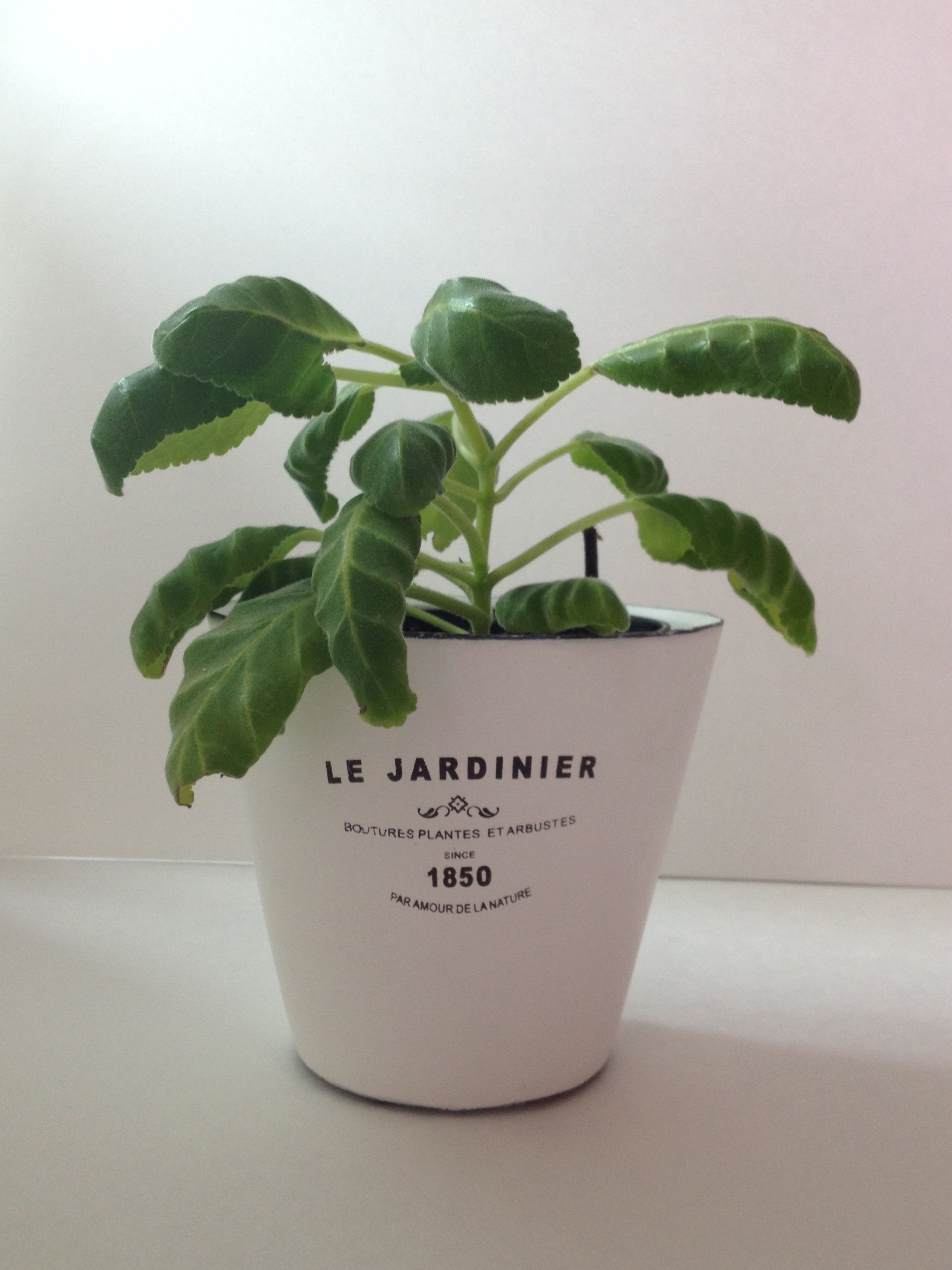 Garden urban barn plant pots white cabana What are miniature plants grown in pots called